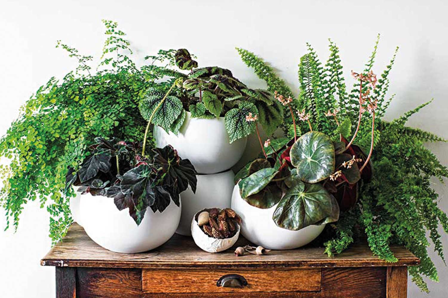 The Perfect Plant For Your Bathroom Home Beautiful Magazine Australia