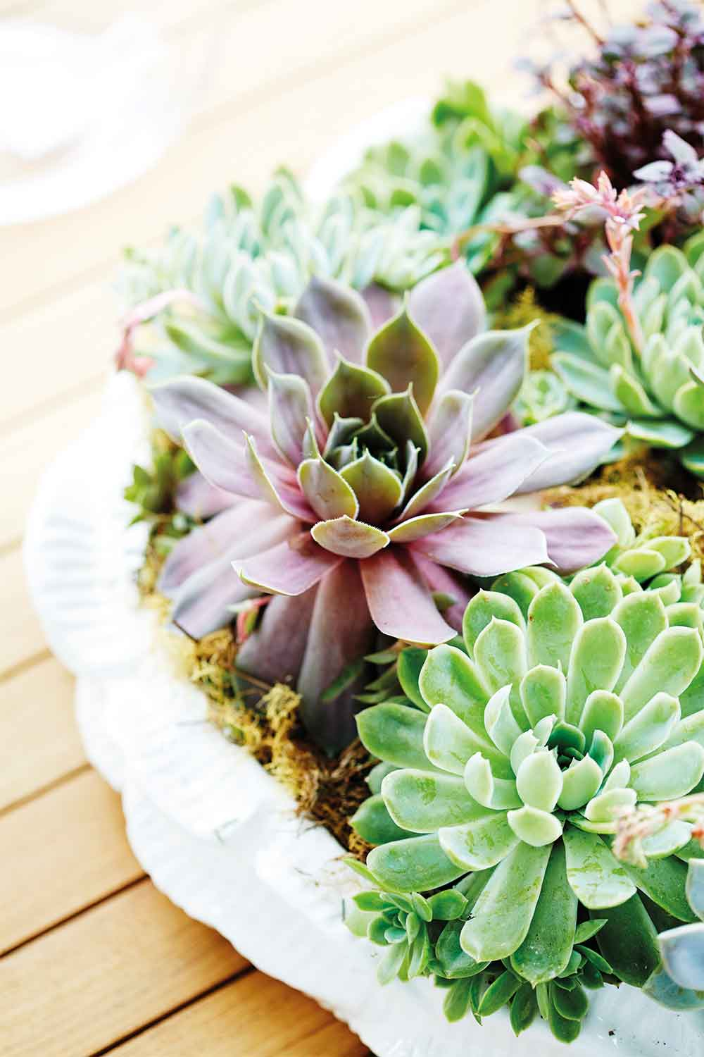 Succulent Christmas Trees Are A Thing This Year Home Beautiful Magazine Australia