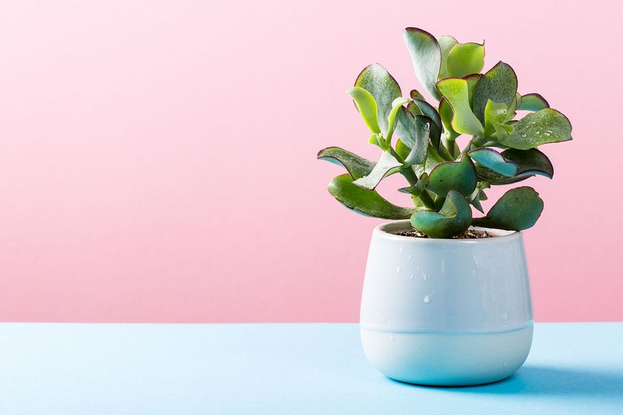 10 of the best pots and plant stands at Kmart